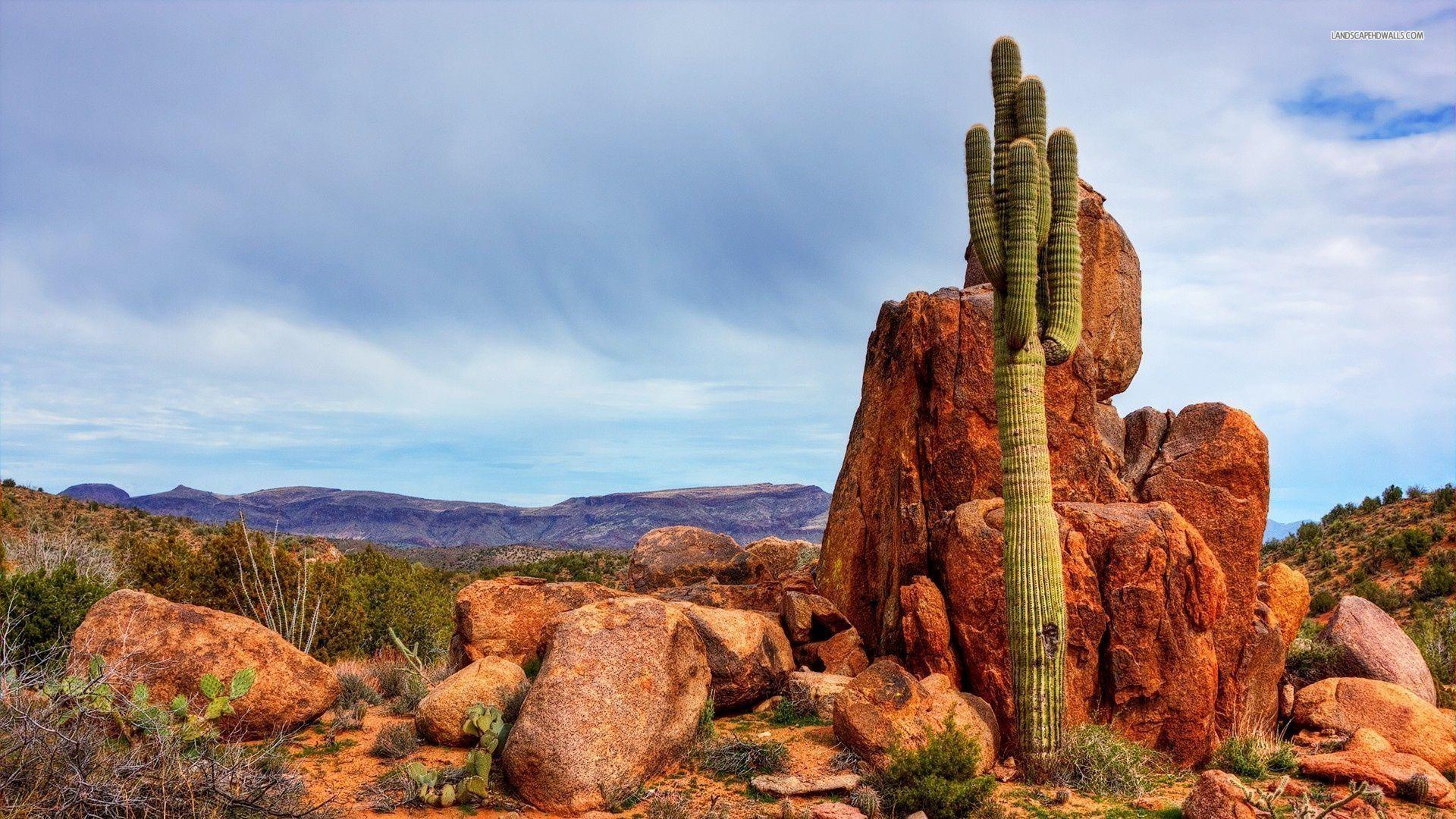 Arizona Desert Beautiful Things I Would Like To See Bucket List