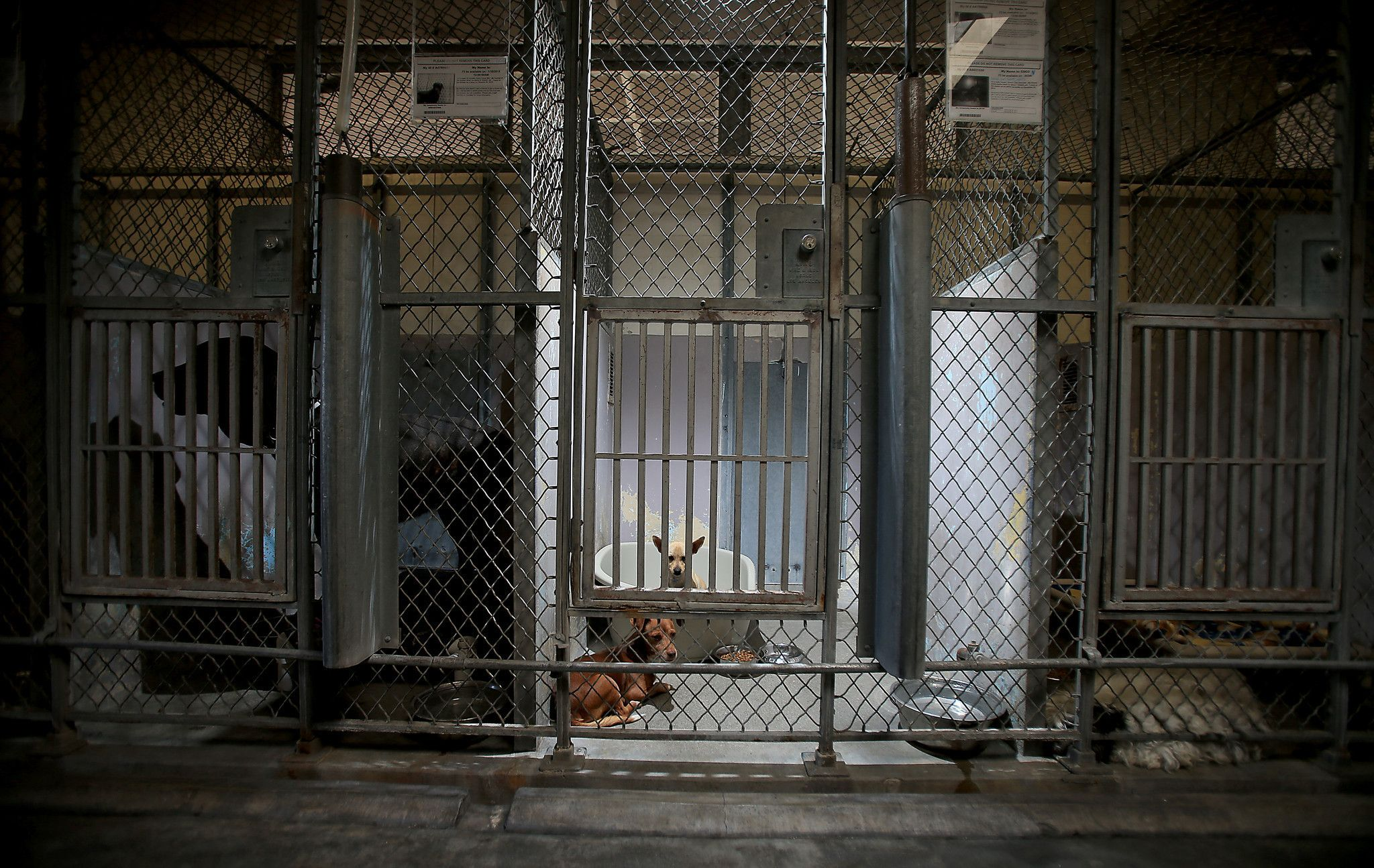 Supervisor Wants L A County To Put A New Animal Shelter In A Jail Animal Shelter Shelter Animals