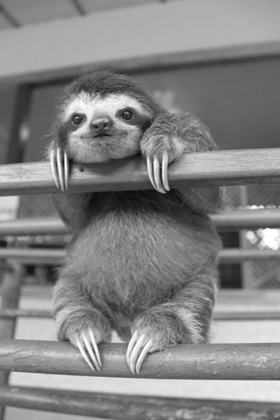 baby sloth.                                                                                                                                                     More