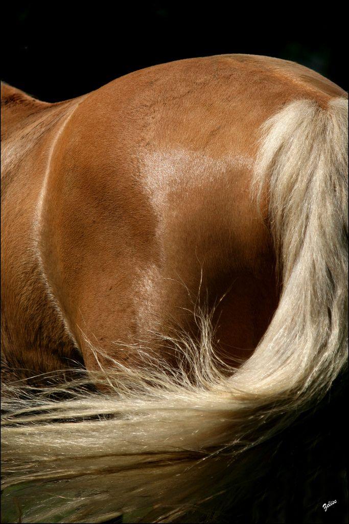 crines rubias lejos el mas lindo equestrian caballos caballo hermosos y crin. Black Bedroom Furniture Sets. Home Design Ideas