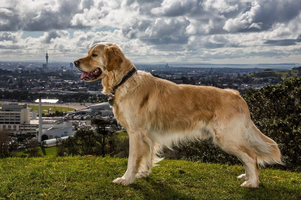 Meet Some Of The Hardest Working Dogs In The World Working Dogs Dogs Assistance Dog