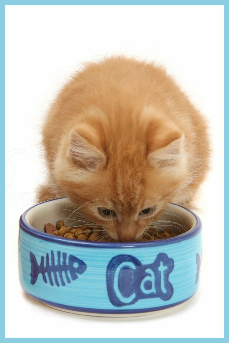 Are you aware that wet cat food is better for your cats