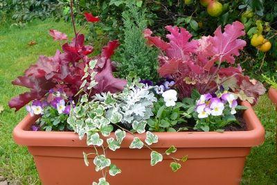 Jardini res d 39 automne vous avez r alis une jardini re for Jardiniere balcon hiver