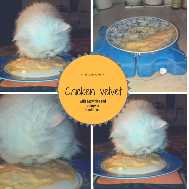Chicken velvet with egg white and pumpkin for adult cats | Elicats Homemade Petfood