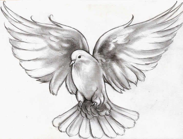 Peace Dove Tattoo Men