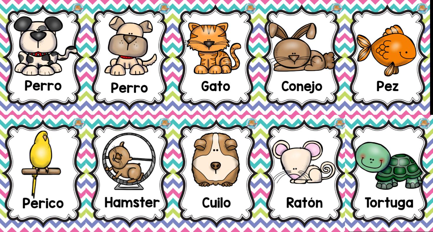 Resultado De Imagen Para Animales Domesticos En Ingles Animal Domestico Perro Gato Gatos