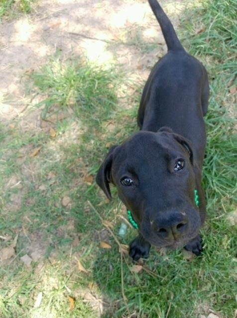 Have You Seen Coco Lost Dog Yorkshireterrier Yorkie Senior Lostpetservices Bradenton Fl Losing A Dog Losing A Pet Service Animal
