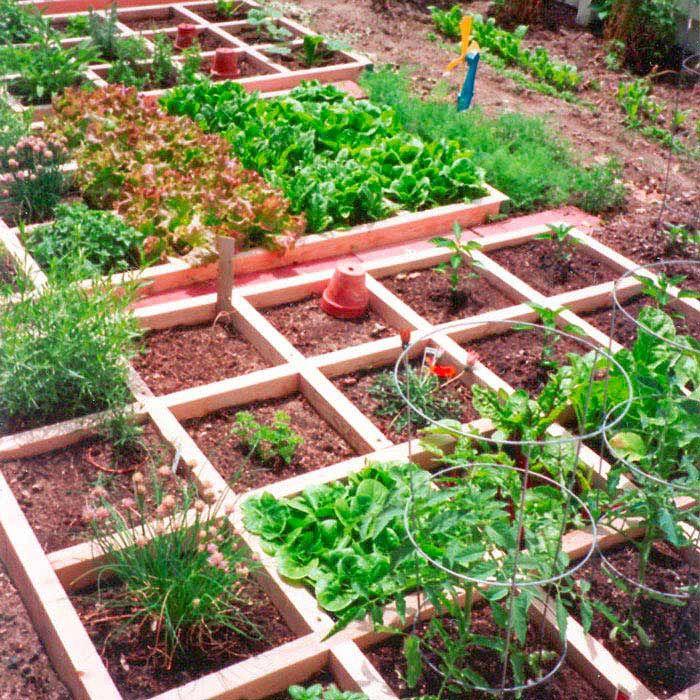 5 Vertical Vegetable Garden Ideas For Beginners: Edible Landscaping: Square-Foot Kitchen Garden