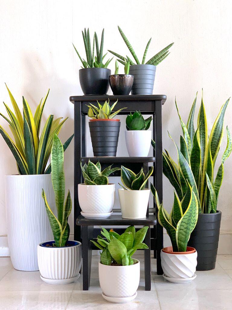 Plantas De Decoracion