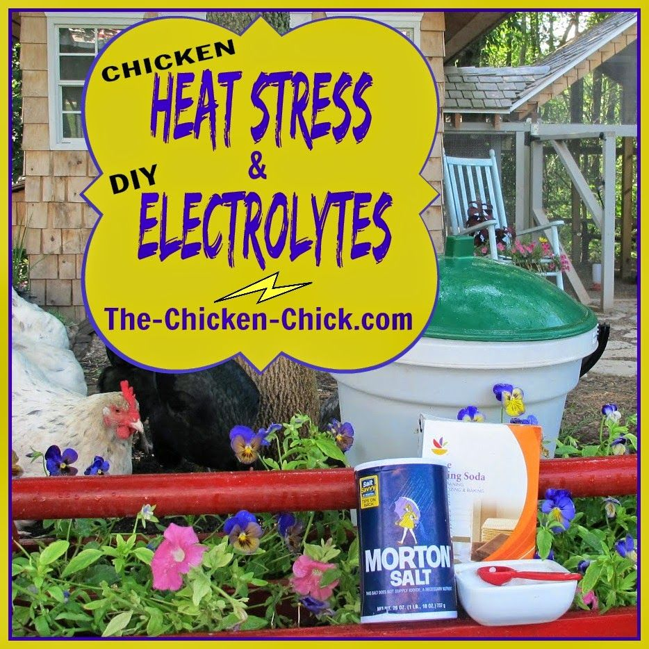 chicken heat stress dehydration and homemade electrolyte solution