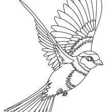 Flying Bird Coloring Page