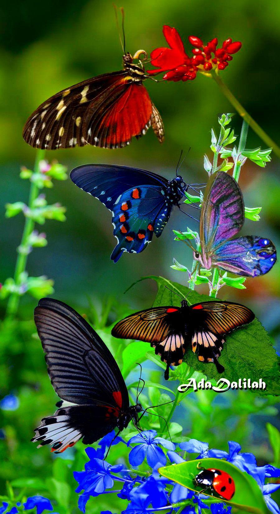 Pin De Ada Dalilah Em Flowers Butterflies Art Creation Em 2020 Fotos De Borboletas Coloridas Passaros Coloridos Fotos De Borboletas