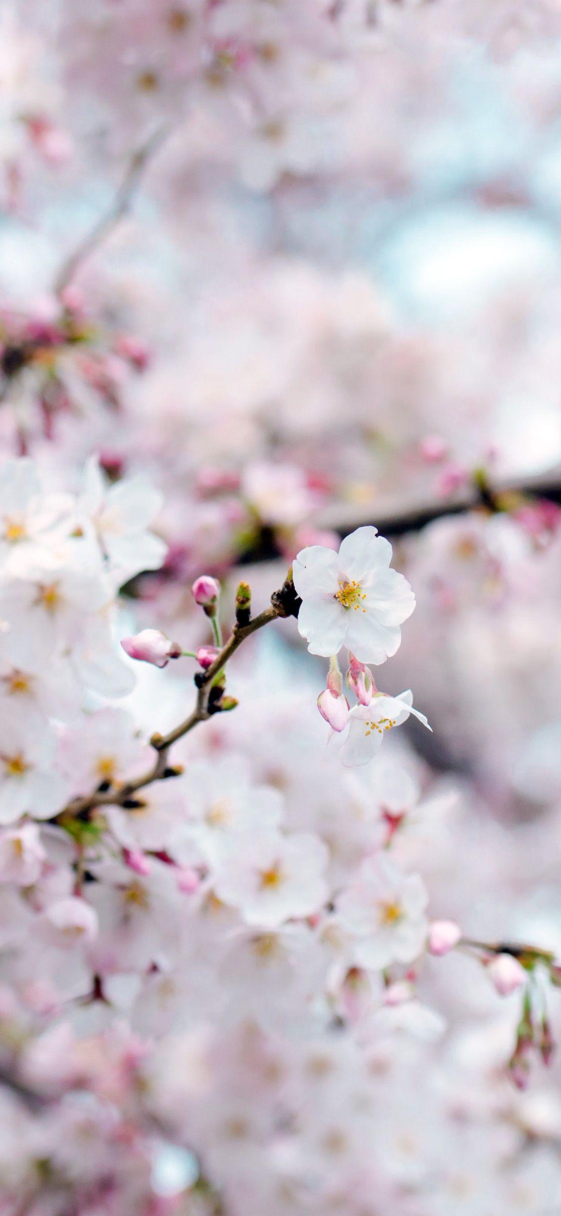 Iphonex Wallpaper Nx70 Cherry Blossom Flower Spring Tree Bokeh Nature Spring Wallpaper Flower Background Iphone Wallpaper Iphone Cute