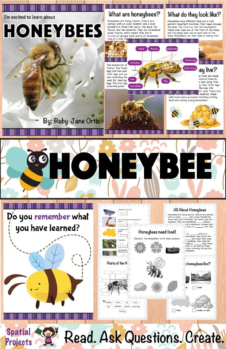All About Honeybees Nonfiction Unit Informational
