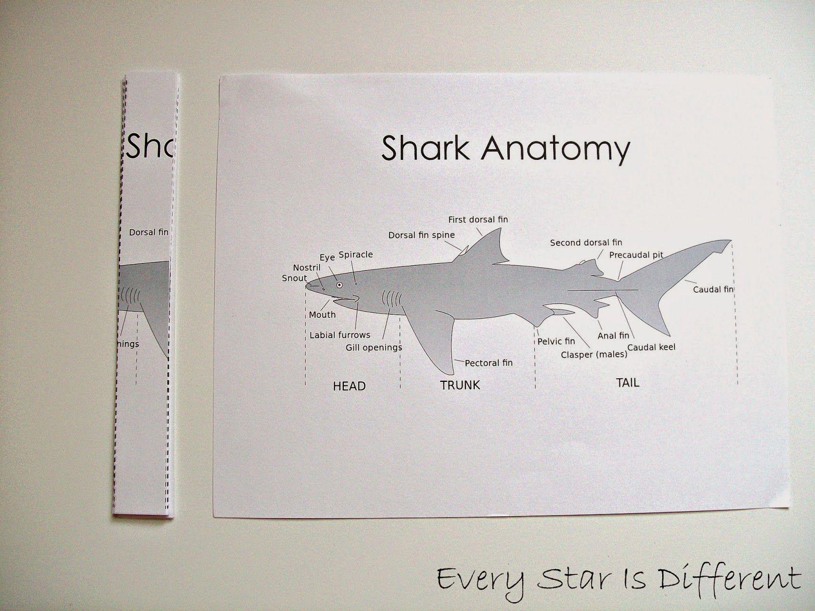 Shark Unit with Free Printables #sharkweekfood