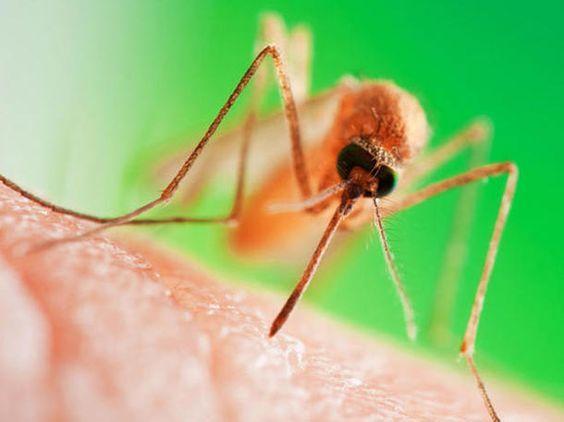 Mücken Im Schlafzimmer Bekämpfen - Best Home Decor