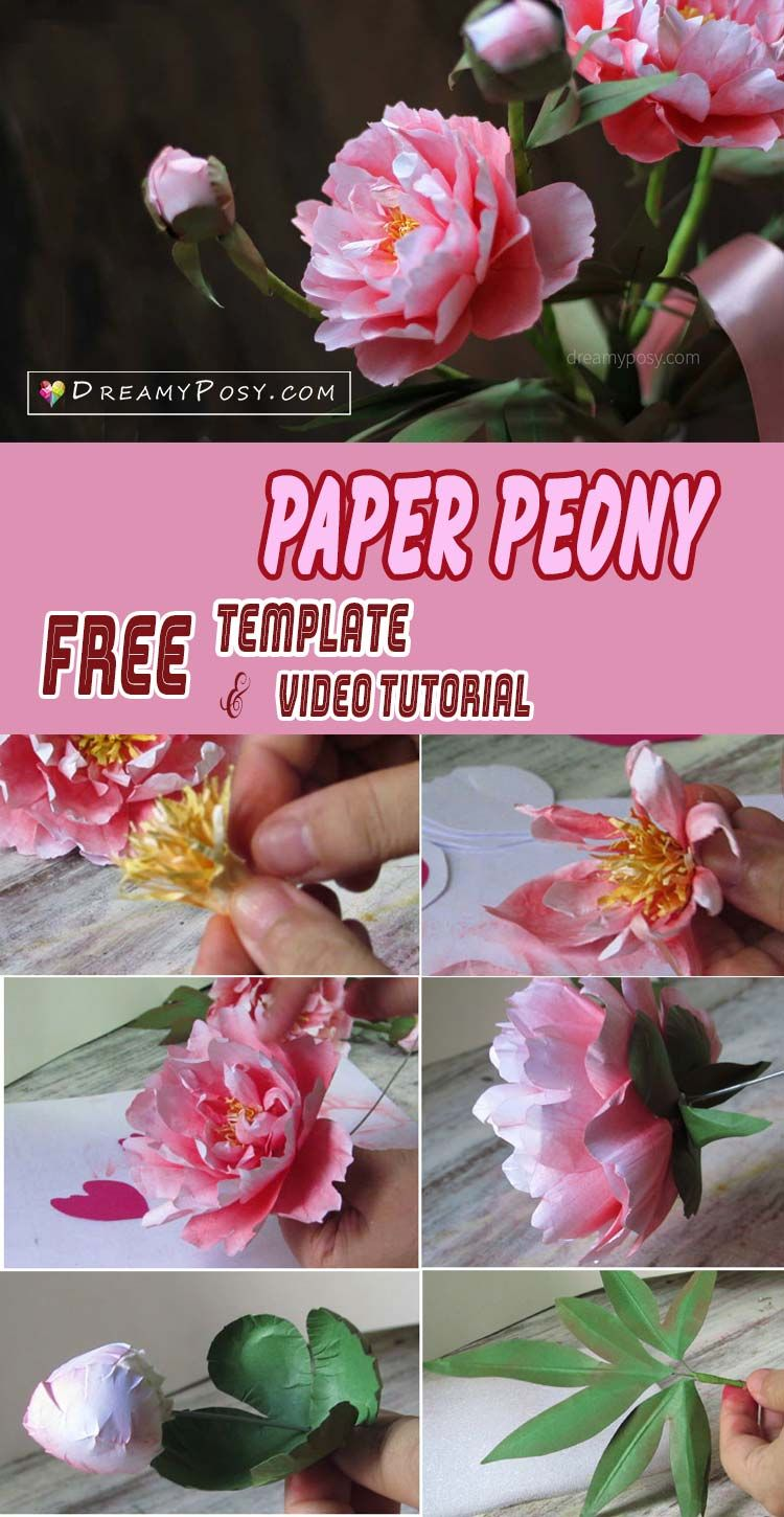 How to make paper Peony from printer paper, FREE template