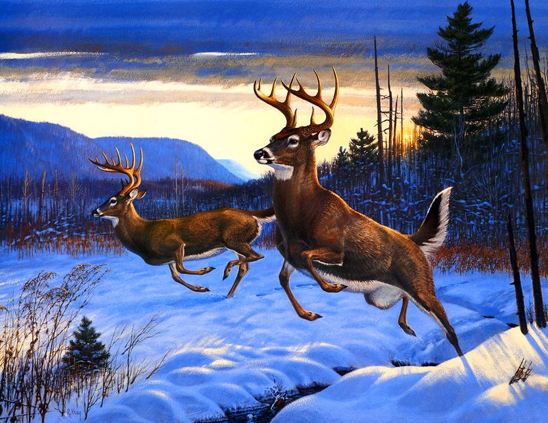White tailed deer pictures pinterest white tailed deer white tailed deer voltagebd Image collections