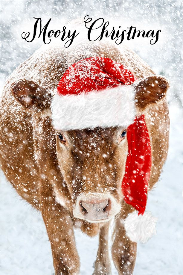 Merry Christmas Animals.Photo Of The Day Www Raisingjane Org Journal Maryjanesfarm Photo