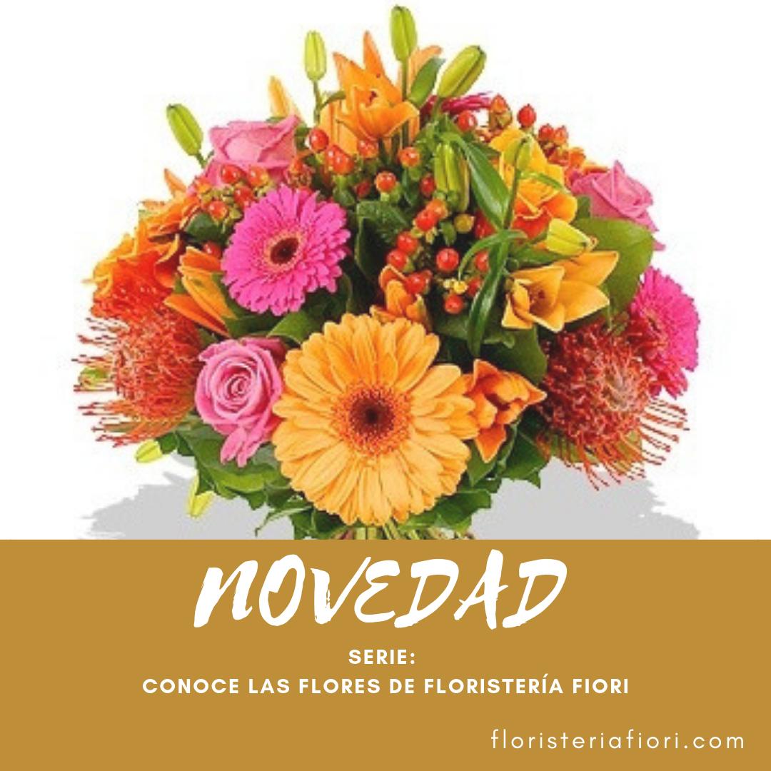Fiori Con La S.Empezamos La Serie Conoce Las Flores De Floristeria Fiori
