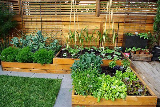 Turn Your Backyard Into An Urban Veggie Garden Permaculture Adventure Share Backyard Vegetable Gardens Vegetable Garden Design Small Kitchen Garden Design