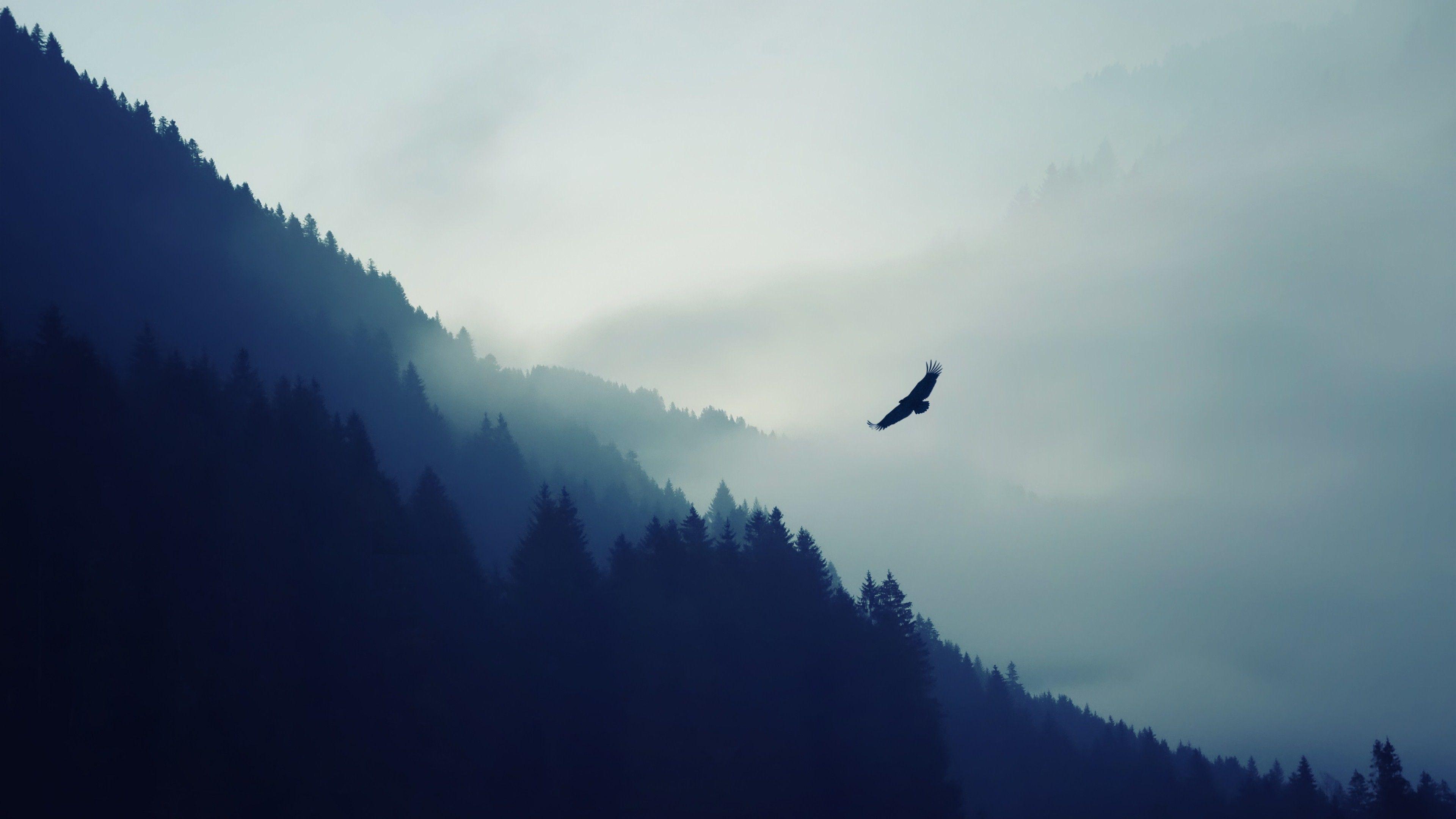 3840x2160 Nature Mountain Eagle Fog Landscape Ultrahd 4k
