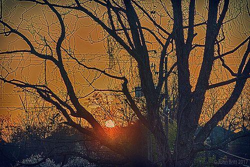 En güzel dekorasyon paylaşımları için Kadinika.com #kadinika #dekorasyon #decoration #woman #women Sunset thru the tree