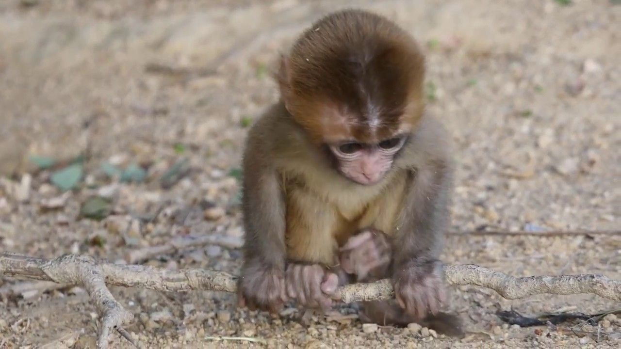 Meet Tiny, the poor lil baby Cute monkey, Lil baby, Baby