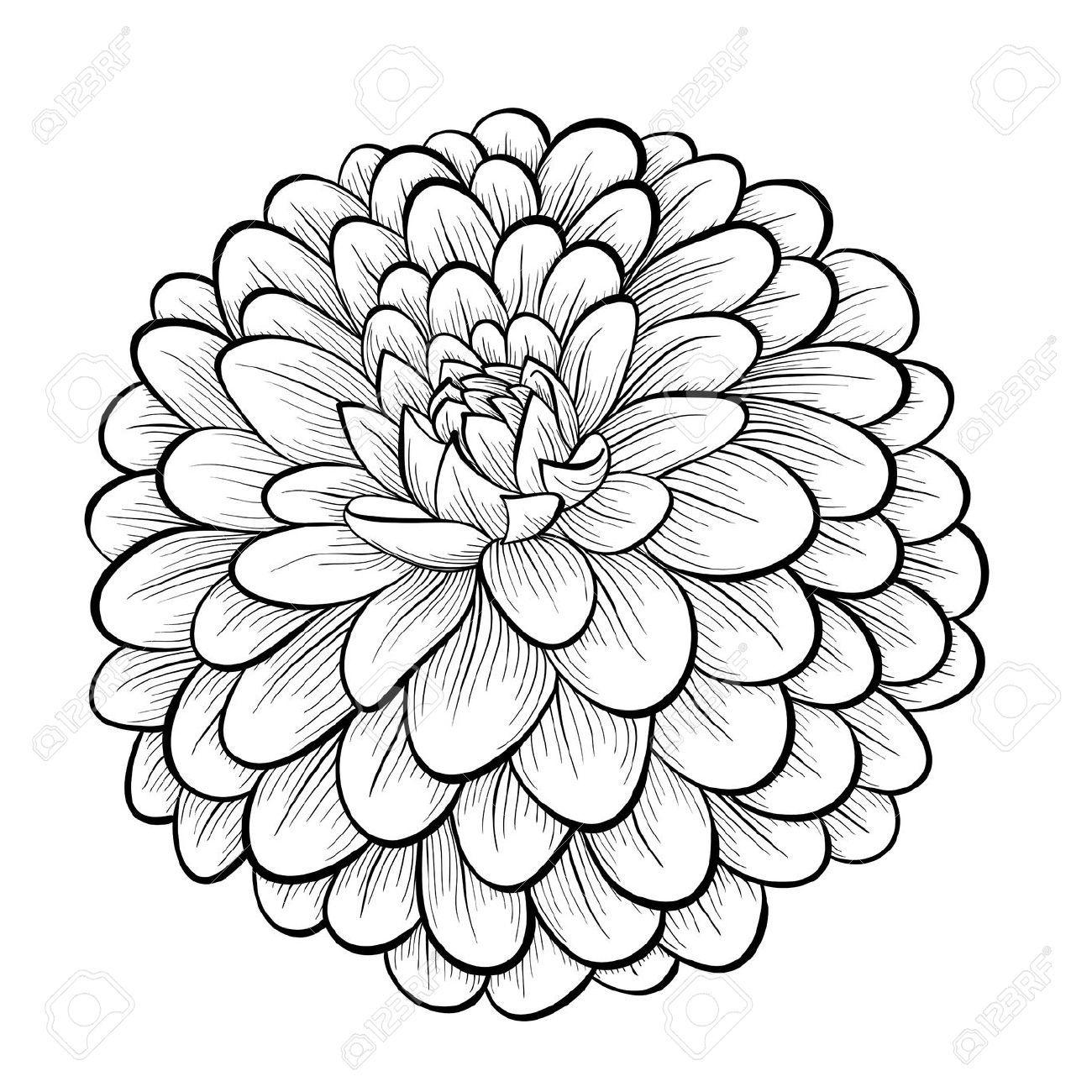 Svd 25951483 Beautiful Monochrome Black And White Dahlia Flower