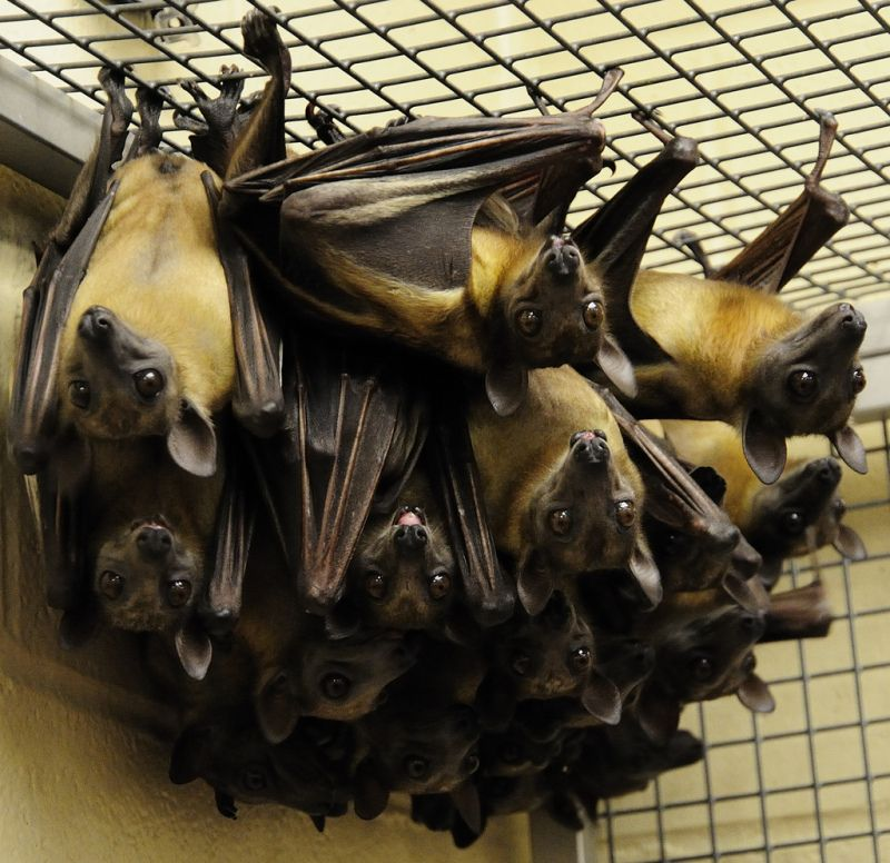 Bats of a leather flock together