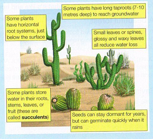 desert plant adaptations - Google Search | Culture ...