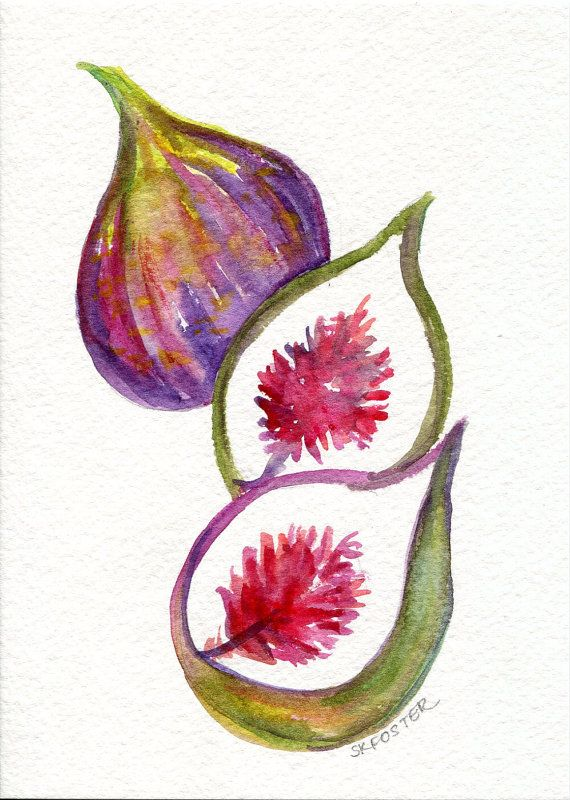 Figs Original Watercolor Painting Small Fruit By SharonFosterArt