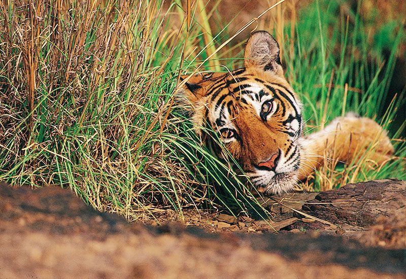 Uttarakhand Wildlife Tour in 2020 Wildlife tour, India