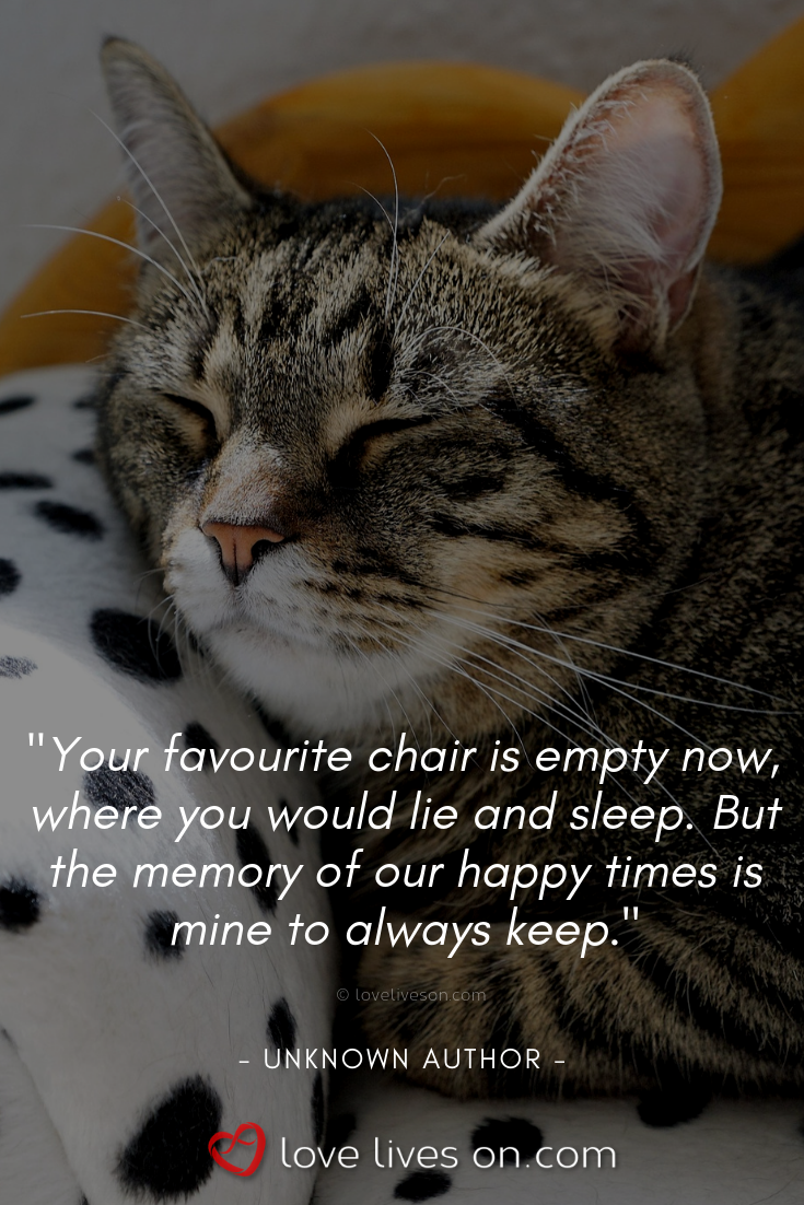 50+ Beautiful Loss of Pet Quotes | Pet quotes cat, Cat loss ...