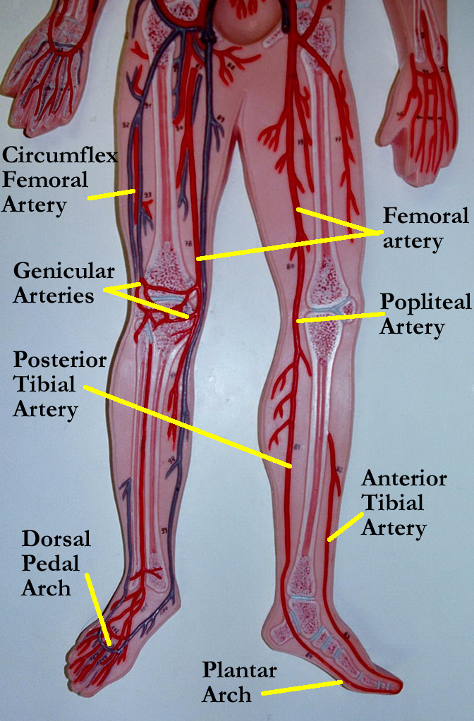 Pin by Robin Decker on Anatomy and Physiology | System ...