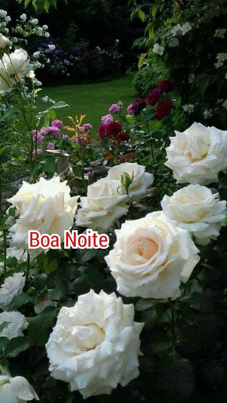 Boa Noite Com Imagens Rosas Roxas Rosas Brancas Rosas