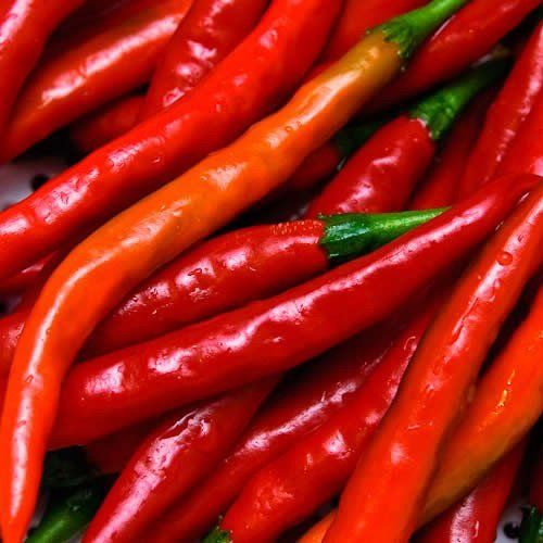 Cayenne Red Long Pepper - 100 Seeds -GARDEN FRESH PACK!  //Price: $ & FREE Shipping //    #home #interior #mirror #decor #design