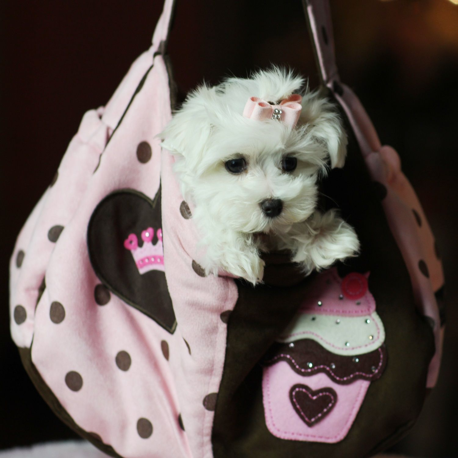 Teacup Puppies Store Luxury Puppy Boutique Supplies and