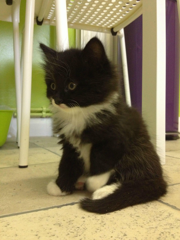 Meet Bandit... (With images) Crazy cats, Cat colors