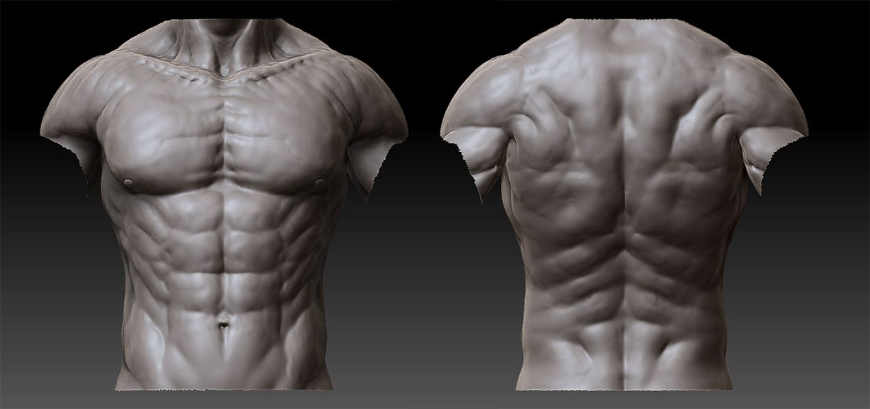 Male Anatomy - 02 by shoaibMalik on deviantART | Anatomy | Pinterest ...