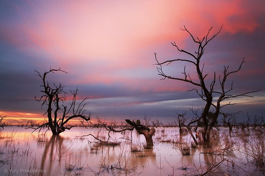 Sunset At Menindee Lakes  Outback Nsw  Australia