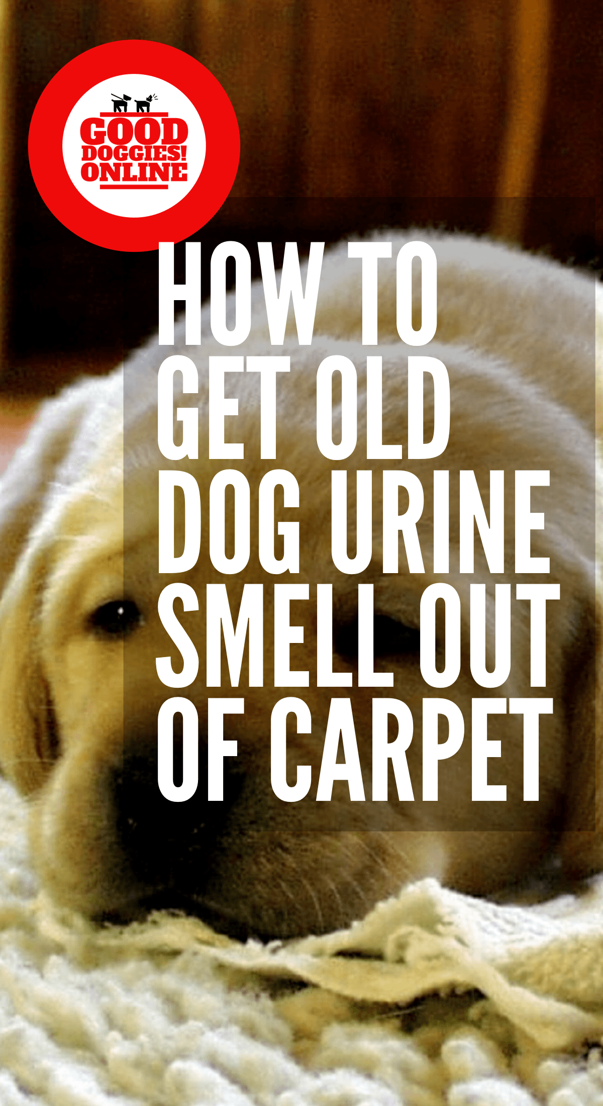 How To Get Old Dog Urine Smell Out Of Carpet Cleaning