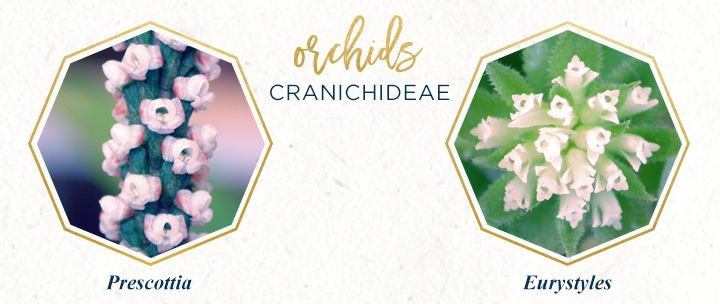 Types of Orchids: A Visual Compendium | Orquidea