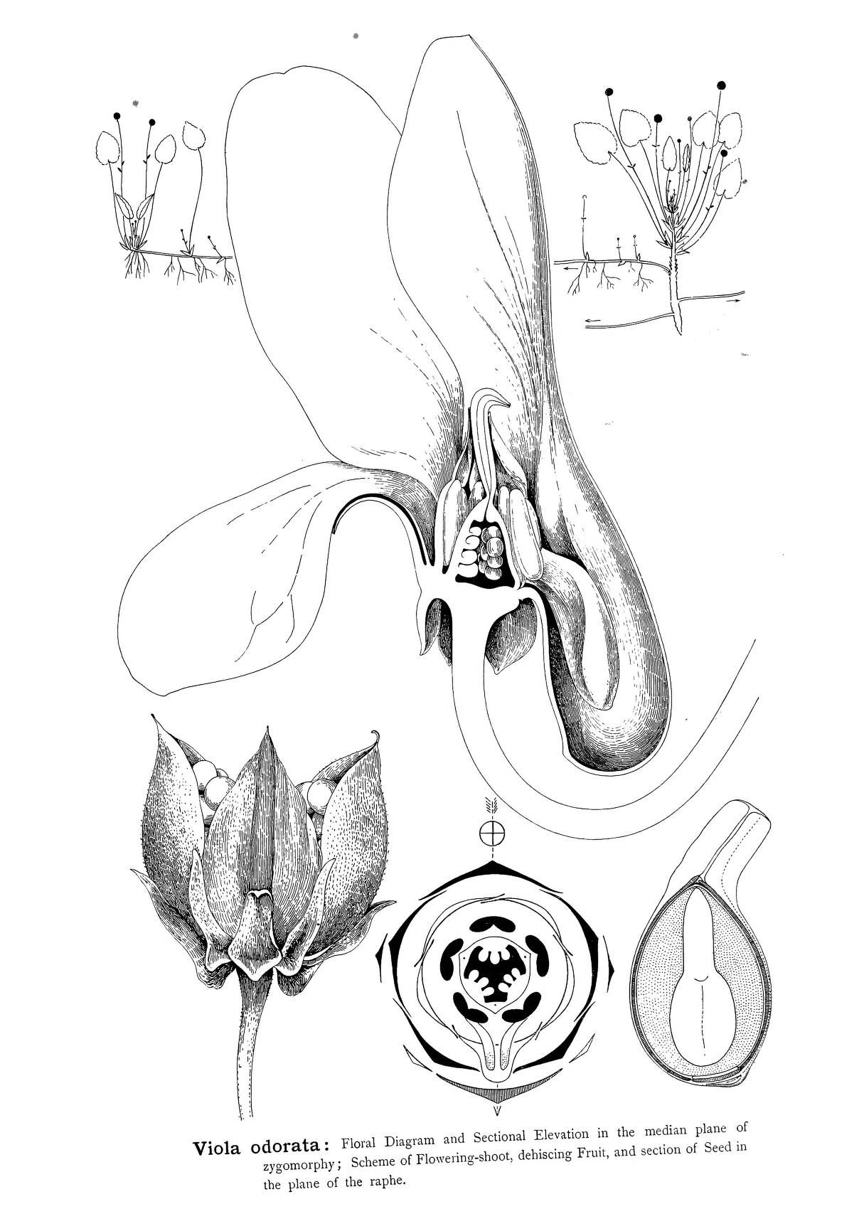 Types Of Floral Mechanism A Selection Of Diagrams And Descriptions Of Common Flowers Arranged As An Introduction To The Systematic Study Of Angiosperms Paperback
