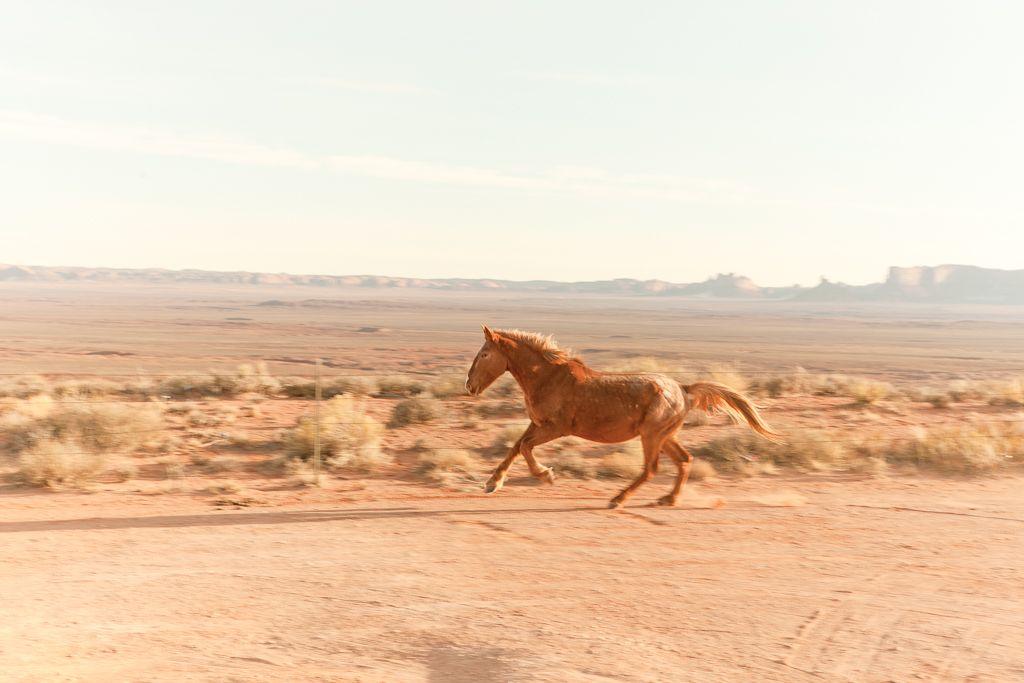 Navajo Horse by Neek Meek