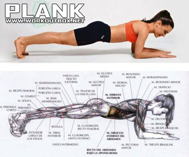 Plank Workout - Sixpack Exercise Healthy Fitness Ab Crunch ...