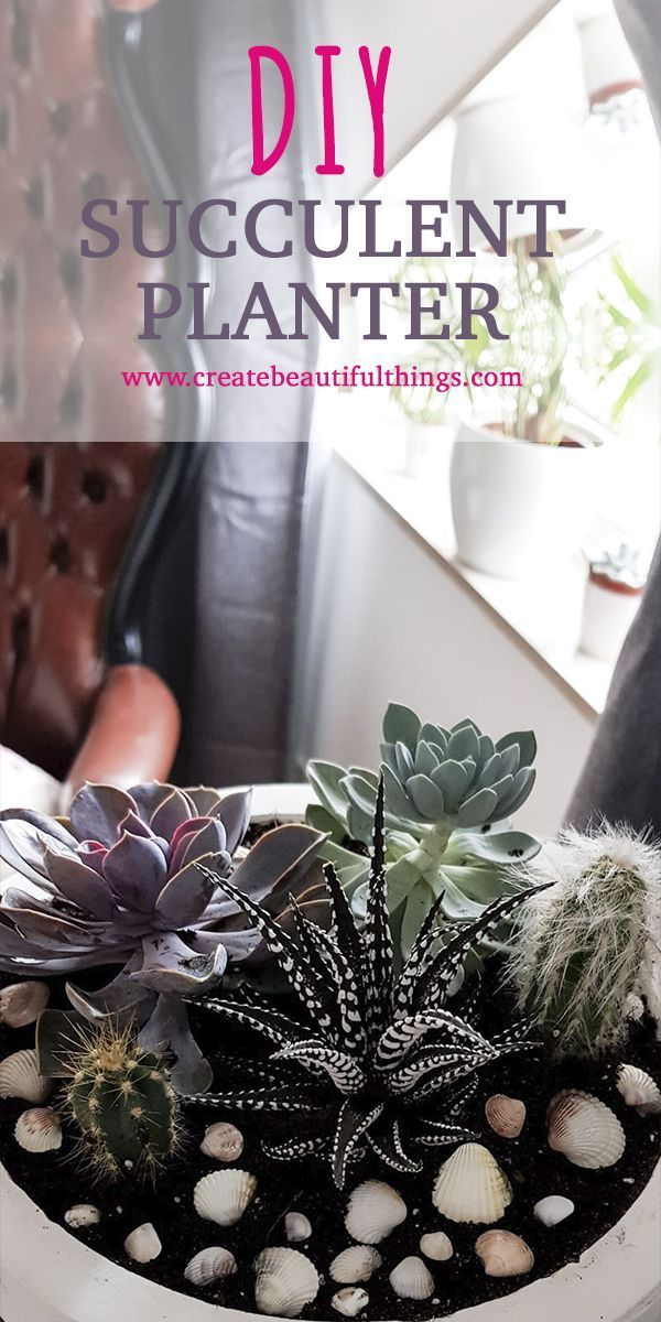 How to Easily Make a Succulent Planter #cactusplant