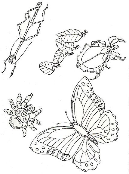 insects coloring pages pdf pdf printable - Rainforest Insects Coloring Pages