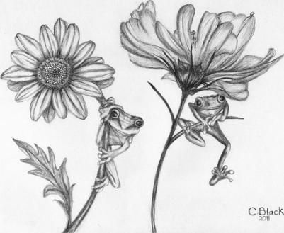 Pencil drawings of flowers flower posters and flower pictures to