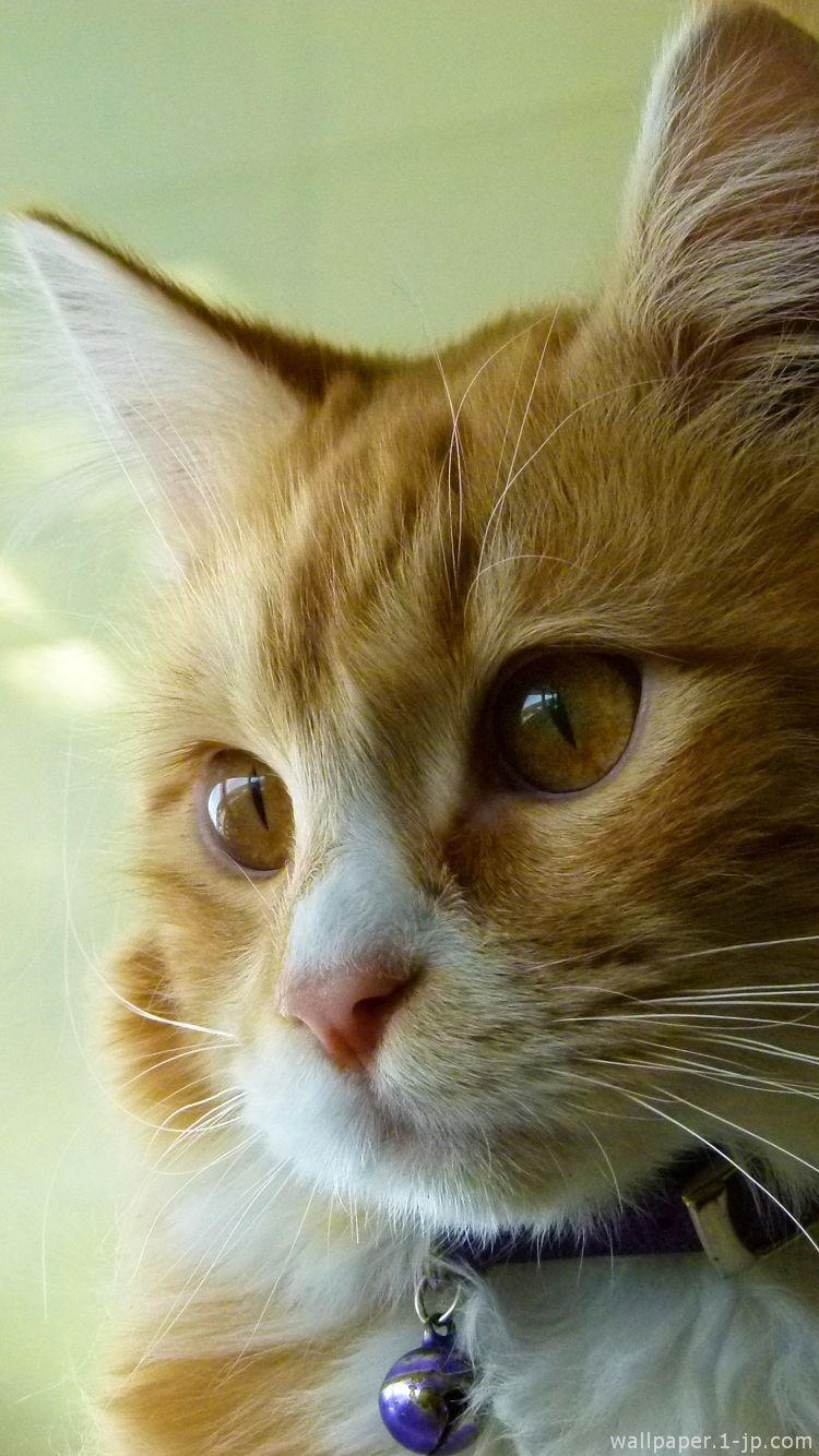 最高の壁紙 猫 スマホ 壁紙 En 2020 Chat Mignon Petit Chat